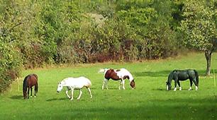 Équitation à proximité