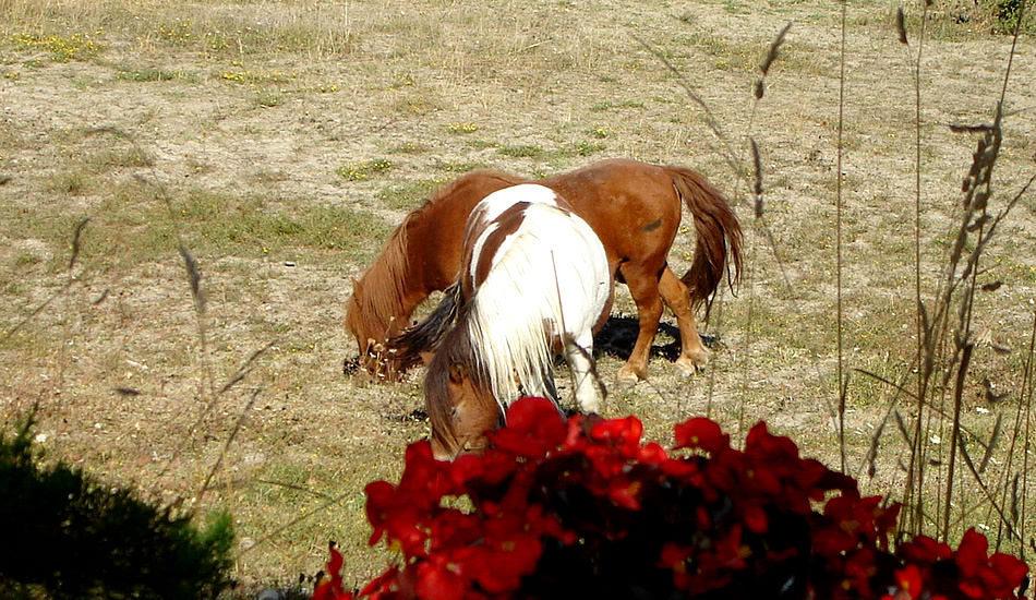 Camping des Rosières équitation